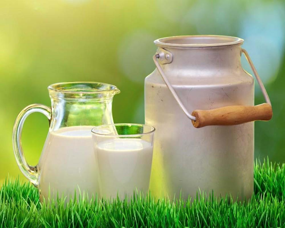 Sữa dê chứa nhiều hàm lượng dinh dưỡng cao